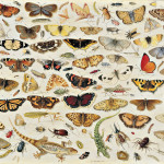 Jan van Kessel the Elder. An Extensive Study of Butterflies, Insects and Seashells, 1671. Oil on panel, cm .45,8 × 66,3. Private collection